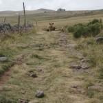 Kühe kommen